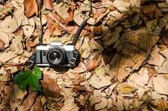 Film camera over dried leaves. With few green leaves,vintage look Royalty Free Stock Photos