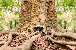 Film camera under a big tree. In natural outdoor, vintage look Stock Photography