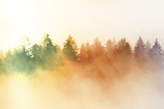 Film effect.Pink daybreak in hilly landcape. Autumn misty morning in a beautiful hills. Peaks of trees. Film grain effect. Pink daybreak in hilly landcape royalty free stock image