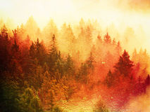 Film effect.Stripped colorful mist. Summer forest after heavy rain. Treetops are stripping inversion. Film grain effect. Stripped colorful mist. Summer forest stock photos