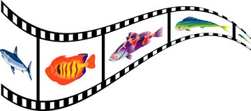 Film - Fish. Film strip with fish images and reflection on isolated Royalty Free Stock Photos