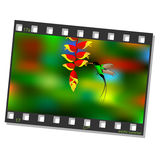 Film frame with hummingbird Stock Photos