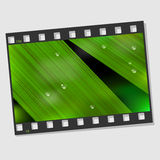 Film frame with macro leaf. And droplets. Vector illustration Stock Photography