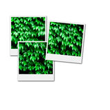 Film Frames for Environment. Several instant film frames on an  white background with green leafs and plants Stock Image