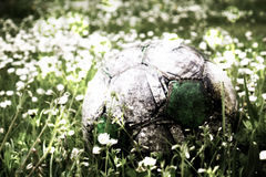 Film grain. Old football ball hidden in the high grass flower and filed Royalty Free Stock Photos