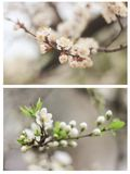 Film photo collage of tender spring leaves and white flowers stock photo
