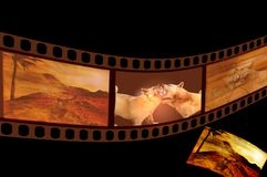 Film strip. Grungy film strip with landscape and dogs Stock Images