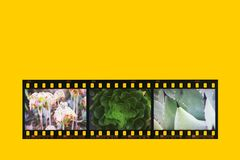 Film strip colored royalty free stock photos