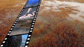 Film strip with different videos. Digital composite of film strip containing different videos of nature and animals and background of a wet field stock video footage