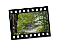 Film strip photo. Showing a pathway through woods Royalty Free Stock Image
