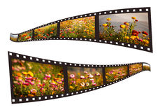 Film strip with pictures Royalty Free Stock Photography