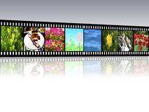 Film strip. With reflection on gray background Royalty Free Stock Image