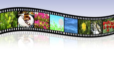 Film strip. Wave film strip with reflection on gray background Royalty Free Stock Images