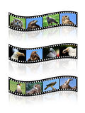 Film strips. Of wild birds with reflections isolated on white Stock Photos