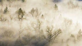 Film ultra alto di lasso di tempo di definizione 4k della nebbia spessa di rotolamento sopra la fine curvata del fiume su dal pun stock footage