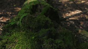 Film- Video in der glatten Bewegung mit einem einsamen Baum, der aus MOS heraus wächst stock video footage