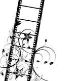 filmblommaremsa stock illustrationer