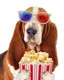 Filme de observação do cão com pipoca Fotos de Stock Royalty Free
