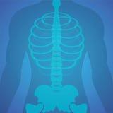 Filme de raio X humano Imagens de Stock