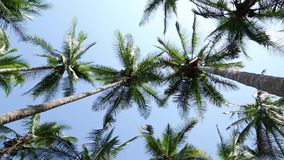 Filmed palm trees on a beach from below stock video footage