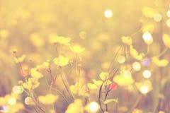 Filmeffect Onscherp fotoeffect Vaag en DE concentreerde gele bloesem en groene stelenbladeren voor achtergrond Stock Foto