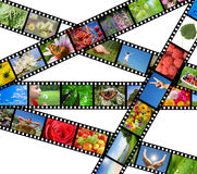 Filmen Sie Streifen mit verschiedenen Fotos - Leben und Natur Lizenzfreies Stockbild