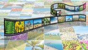 Filmen som göras med olika naturfoto Arkivfoto