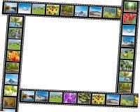 Filmen som göras med olika naturfoto Arkivfoton