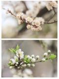 Filmfotocollage av mjuka vårsidor och vita blommor arkivfoto