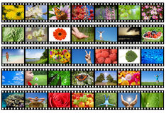 Filmi la striscia con differenti foto - vita e natura Immagine Stock