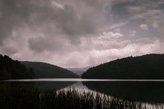 Filmiskt skoglandskap i mörka signaler arkivbild