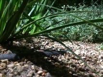 Filmiskt skott av gräs royaltyfri bild