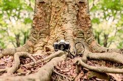 Filmkamera under ett stort träd Arkivbild