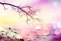 Filmkorn Romantische Atmosphäre, bunter Sonnenuntergang in Meer Steiniger Strand mit verbogenem Baum- und Pinkhimmel im Wasserspi Stockfoto