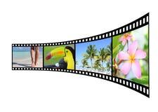 Filmremsa med bilder av den tropiska naturen Royaltyfria Bilder