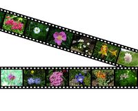 Films with images of flowers Royalty Free Stock Image