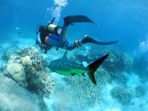 FilmShark. Divers filming Shark Stock Photography