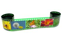 Filmstrip. Green filmstrip with images of nature Royalty Free Stock Photo