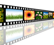Filmstrip. The picture shows a filmstrip with different motives of flowers and grass Royalty Free Stock Photography