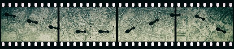 Filmstrip Background with Ants Path. Abstract Illiustration Stock Image
