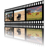 Filmstrip of Domestic Farm Animals. Horses, beef cow and calf also young milk cows Royalty Free Stock Photos