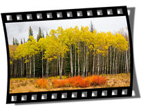 Filmstrip Frame. Cut piece of filmstrip of a travel movie on a developed negative curled at the edges Stock Photo