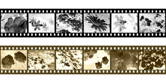 Filmstrip negatives Royalty Free Stock Images