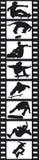 Filmstrip Skateboardfahrer stock abbildung