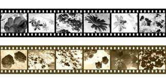 filmstripnegationar vektor illustrationer