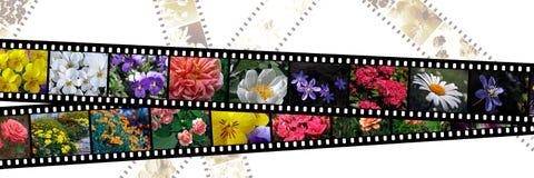 Filmstrippen van bloemen Stock Foto