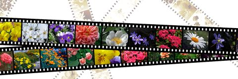 Filmstrips of flowers Stock Photo