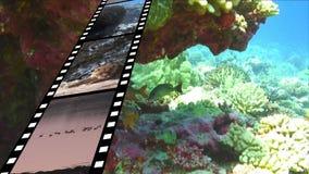 Filmstrook en onder het water stock illustratie