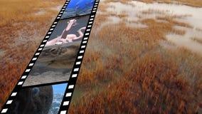 Filmstrook met verschillende video's stock videobeelden