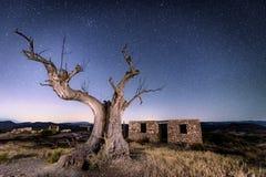 Filmu drzewo - Tabernas, almerÃa Hiszpania zdjęcia stock